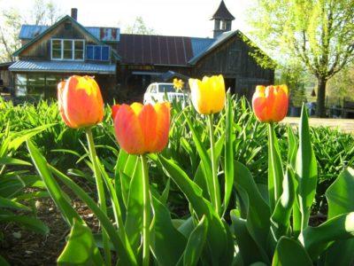 1409May Blooms