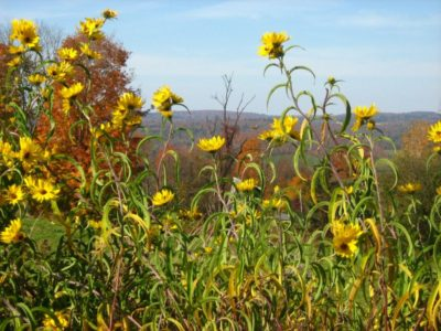 1296Flowers of Fall