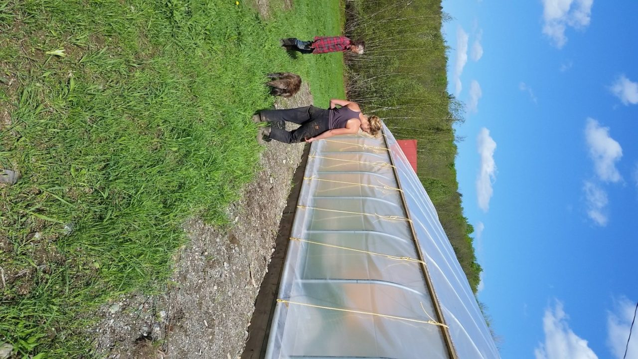 Inspecting the greenhouse to ensure the wind doesn't take it away!