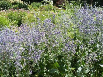 2094Mid-Summer Gardens