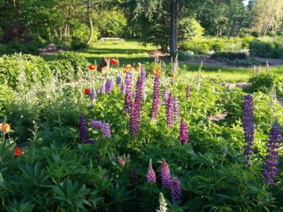 2390Walking in the Gardens